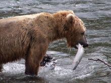 Katmai, Alaska