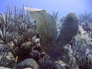 Fan corals enhaced