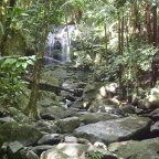 A Day in El Yunque National Rainforest